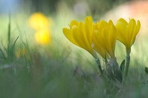 fonte: fiorilandia.blogspot.com